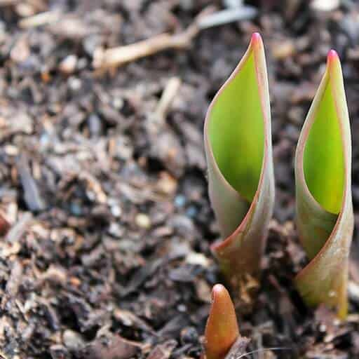 help your garden get ready for spring