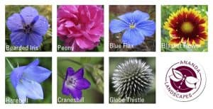 Types of flowers and the Ananda Landscapes logo in the bottom right corner