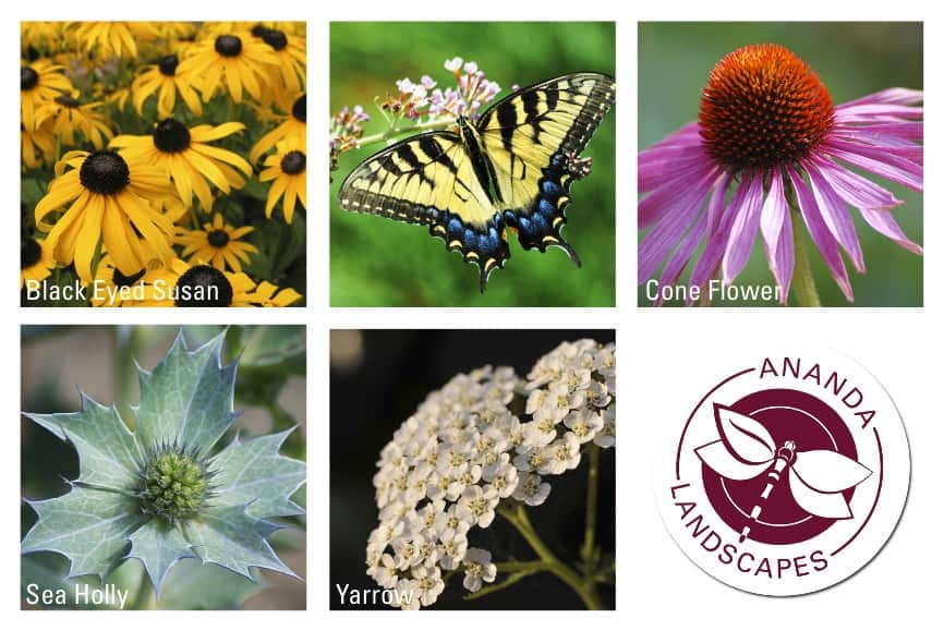 4 Flowers To Plant In Calgary To Attract Butterflies