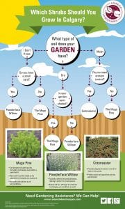 "An infographic of ""Which Shrubs Should You Grow In Calgary"""