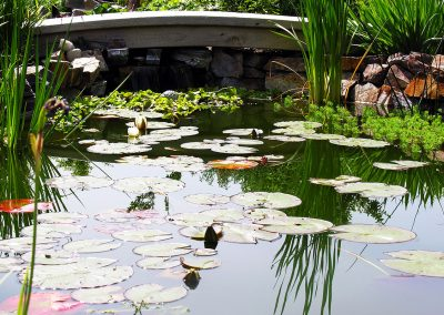water-feature-pond
