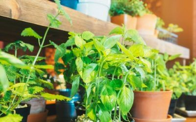 How to grow vegetables all year round