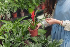 6 Reasons Why You Need A Greenhouse In Calgary
