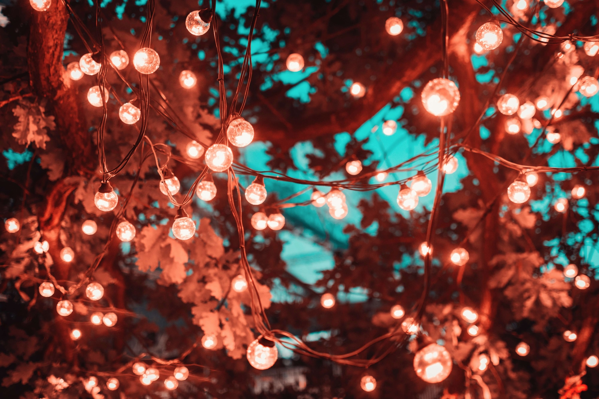 red fairy lights in a tree with a light blue background in a backyard